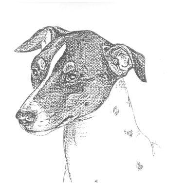 nederlandse ierse terrier